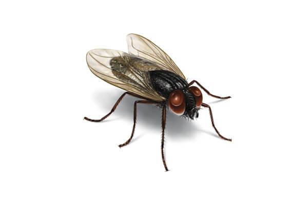 Мухи - ДДД - Пръскане против мухи