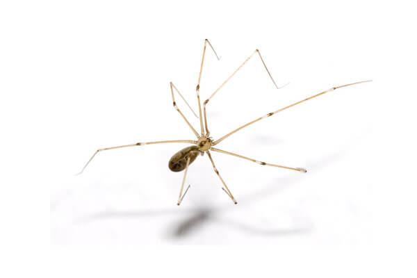 Паяци - ДДД - Пръскане против паяци - Саниста ВИП