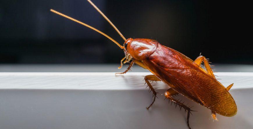 Хлебарка, която лази в банята-sanista.net
