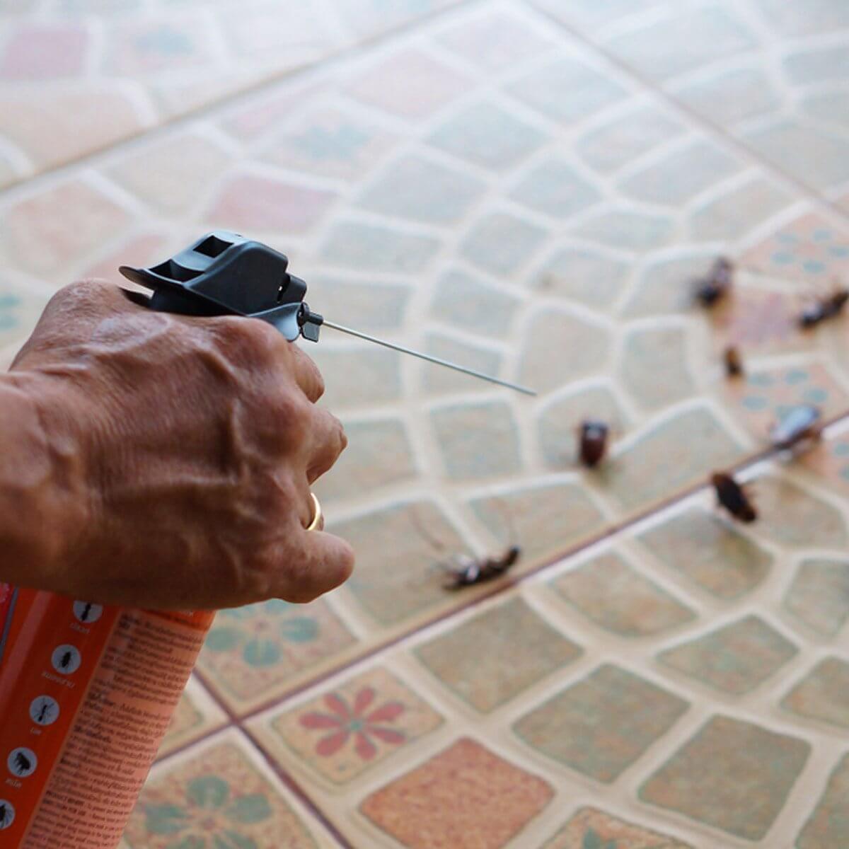 Хлебарки - превенция - унищожаване - ДДД услуги - Саниста ВИП