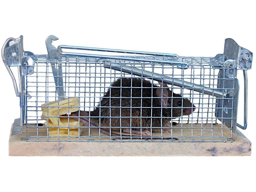 Хуманен капан за мишки и плъхове-sanista.net