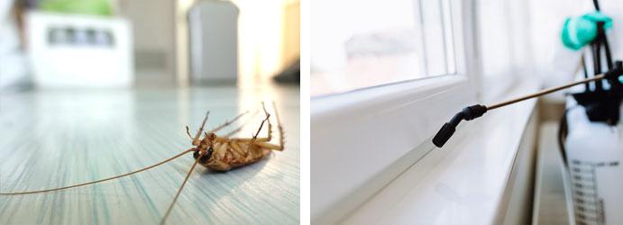 При обработка по правилния начин и правилните средства, насекомите се унищожават.