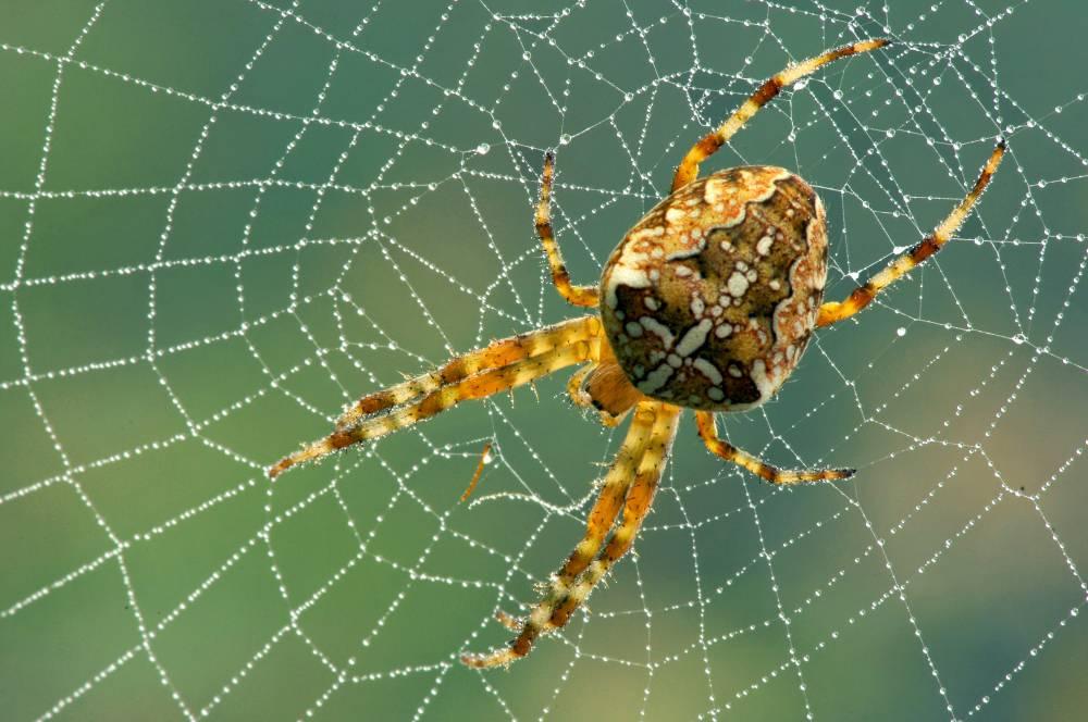 Насекоми - паяци. В много страни те са разпространени като защитниците на дома.