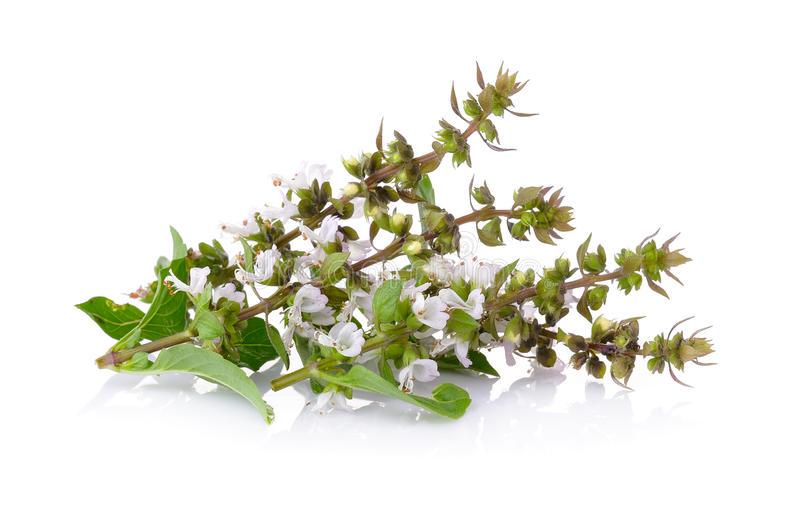 Босилек - естествена защита против комари. Аромата на босилек и маслото от това растение помагат против комари.