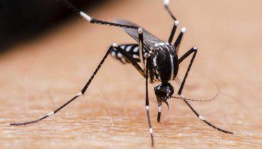 Комар забил хоботчето в кожата на човек и готов да смучи кръв.