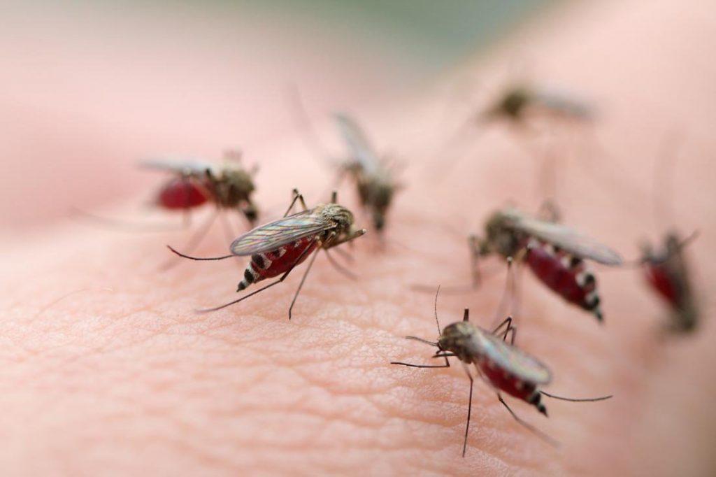 Ухапвания от комари може да доведе до подуване, алергия, оток и други неприятни последици.