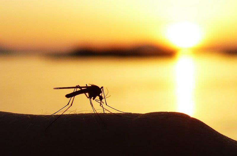 Комари през лятото. Най-често обитават топлите и влажни места.