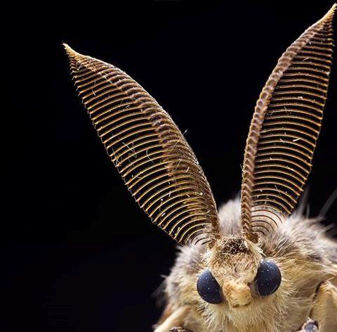 Молец - летящ инсект. Ако има голямо нашествие от молци вкъщи, потърсете професионалисти по ДДД защита.