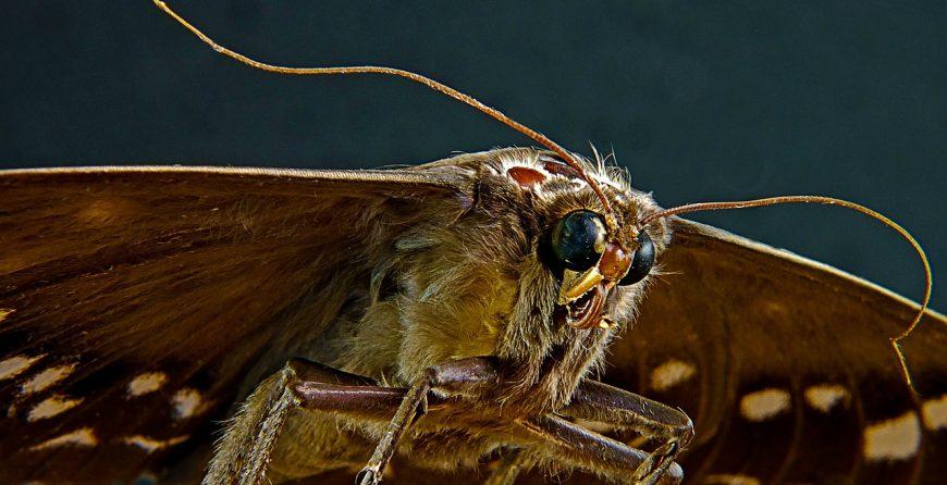Молец - летящо насекомо в дома и природата. В дома обитава местата с дрехи и шкафовете с хранителни продукти.