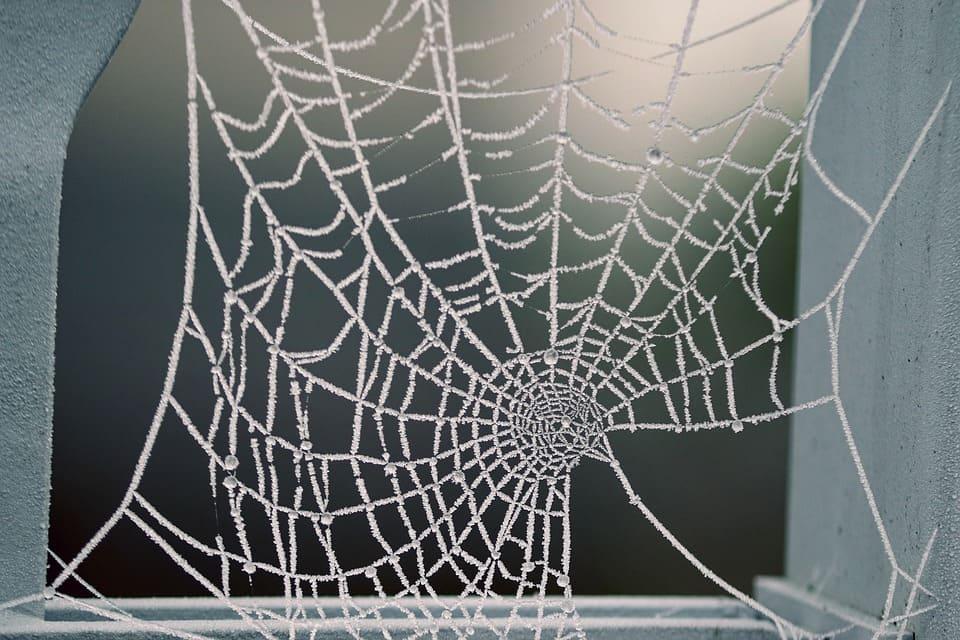 Паяците влизат в домовете ни през различни места: пукнатини около касите, с градински продукти, цветя и др.
