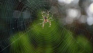 Паяците са пълзящи насекоми от разред Aranae. В България се срещат около 700 вида.