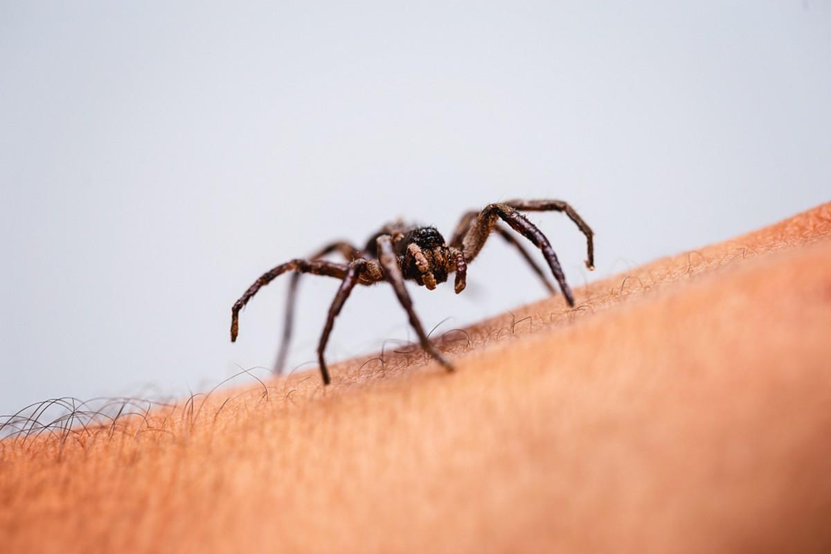 На територията на нашата страна се срещат изключително малко паяци, чието ухапване би било опасно, един от тях е т.нар. вдовица.