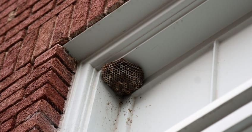 Ефективното справяне с проблема за прогонване на осите, включва унищожаване на гнездото, което обитава осата майка.
