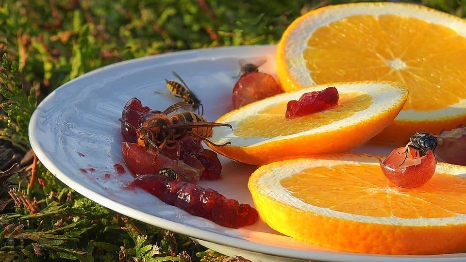 Осите консумират нектар, плодове и други насекоми. Те са по-агресивни и нападателни сравнени с пчелите