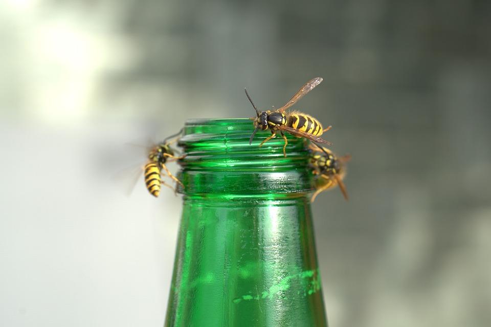 Oсите са хищни насекоми. Хранят се, убивайки вредни за растенията насекоми.