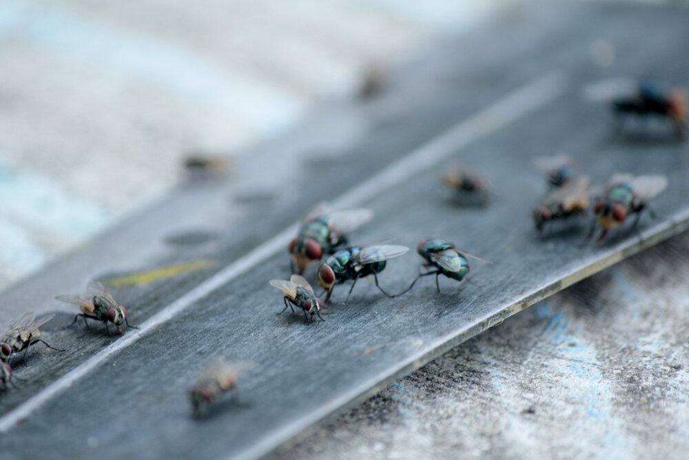 Живота на мухите