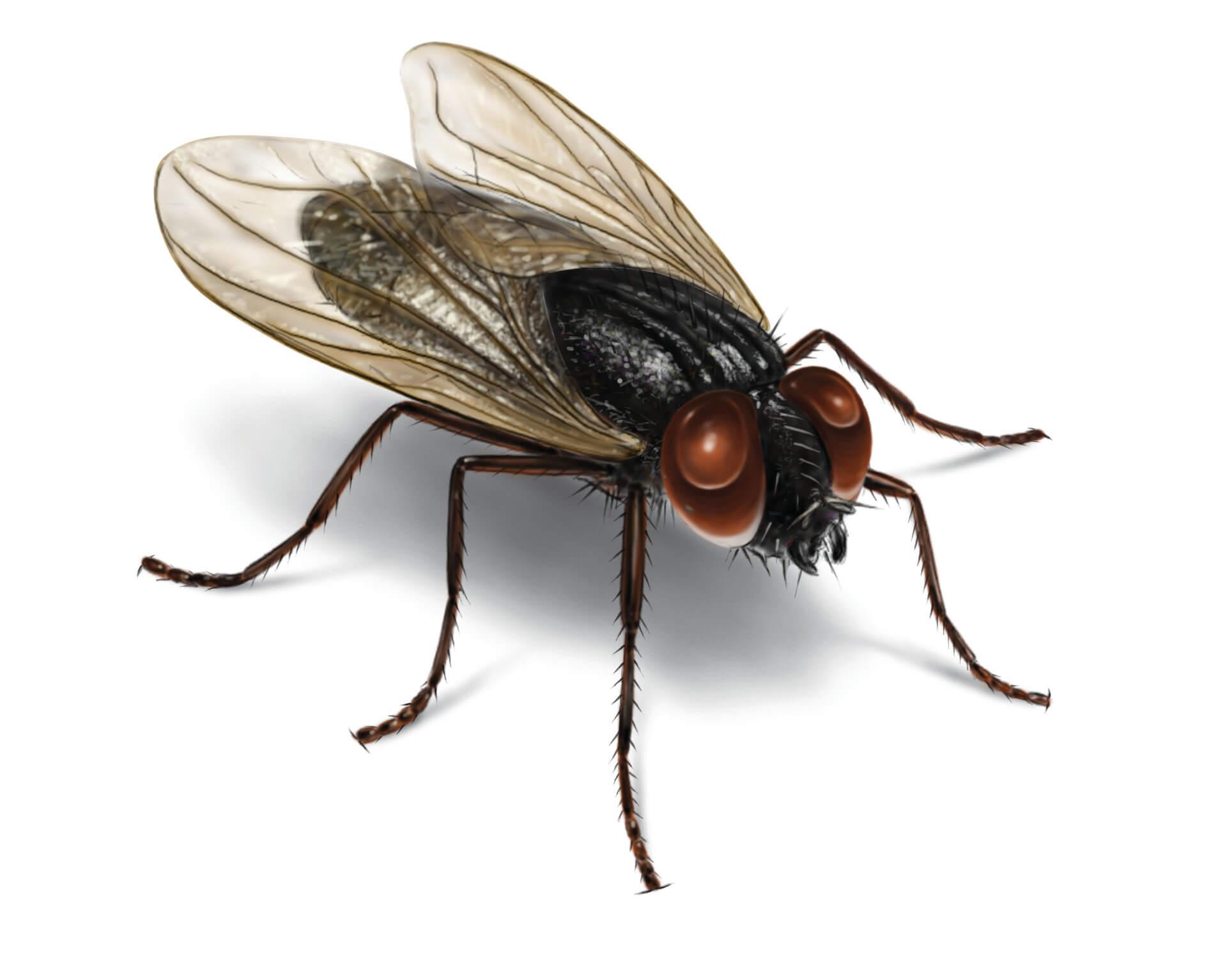 Изображение на муха отблизо