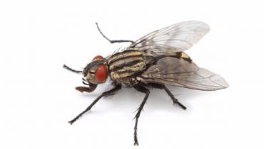 муха кацнала на бял фон
