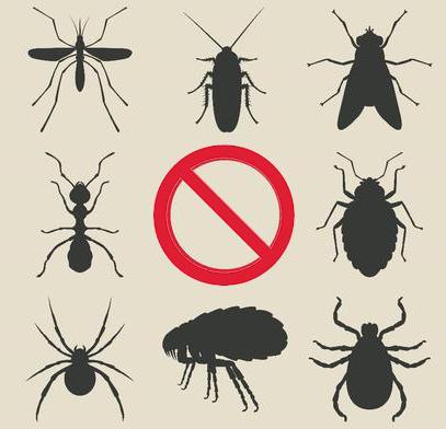дезинсекция от Саниста ВИП срещу всички пълзящи и летящи насекоми