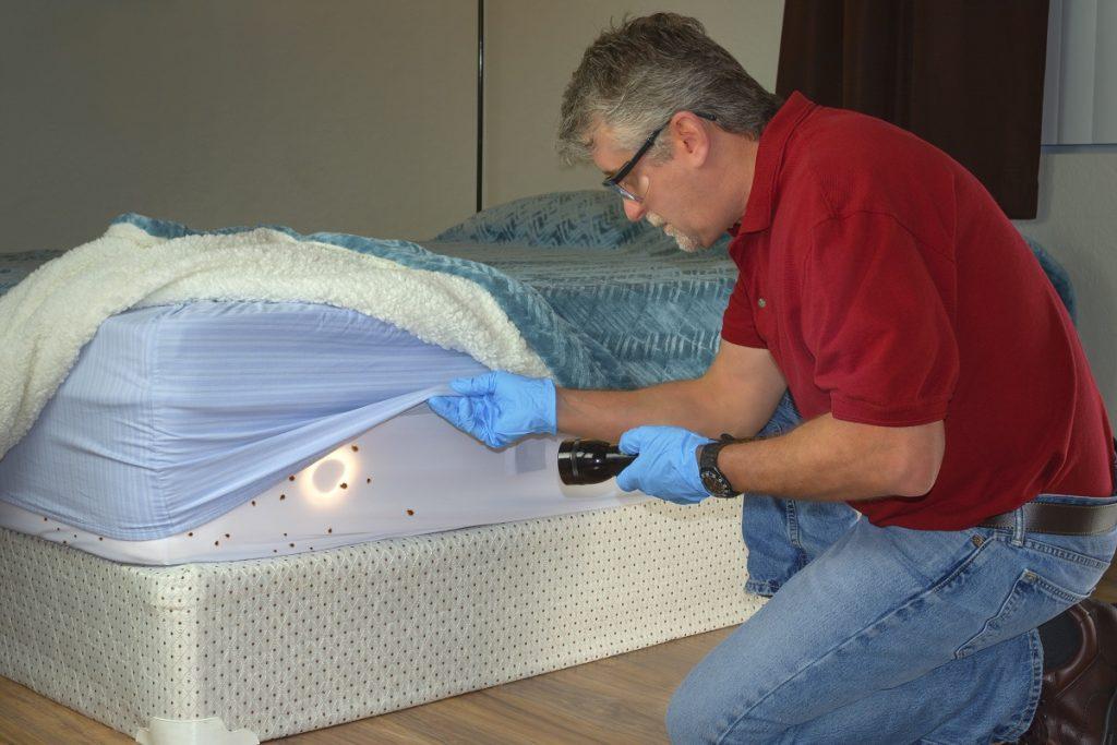 мъж открива дървеници на матрак от легло